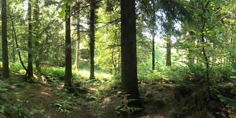 Forest Bathing and Mindfulness - with Mindfulness Teacher and Forester Jay tickets