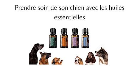 Prendre soin de son chien au naturel avec les huiles essentielles billets