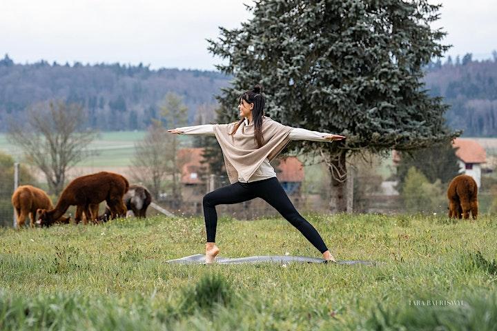 Alpaka Yoga Region  Basel: Bild