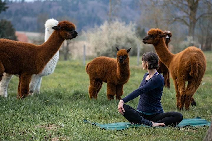 Alpaka Yoga Bern Nord: Bild