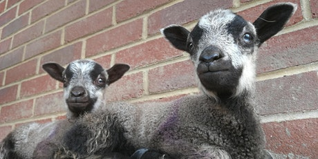 Southampton City Farm - Public reservation tickets tickets
