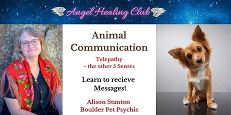 Animal Communication- Telepathy + the 5 Five Senses - Alison Stanton tickets