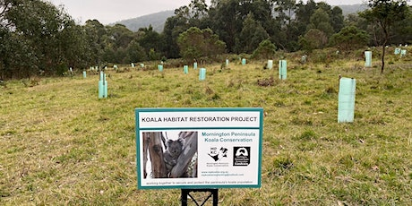 Koala Food Tree Planting Day - Dromana tickets
