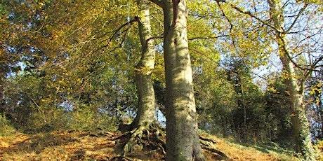 Conservation Task - West Earlham Woods tickets