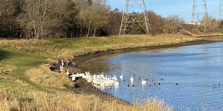 Wildlife & Wellbeing walk by the Don  -  (Healing Nature) tickets