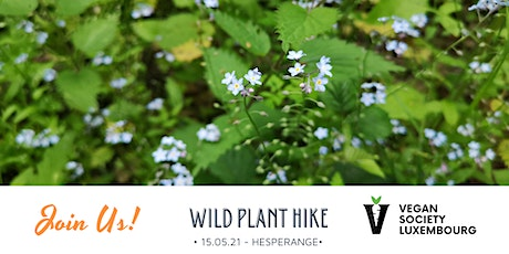 Wild Plant Hike with Meditation and Lunch Tickets