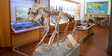 Ingresso Museo Civico di Paleontologia biglietti