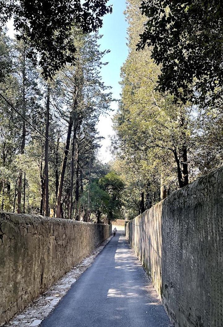 Immagine Trekking Urbano sulla collina di Quarto alle Montalve di villa la Quiete
