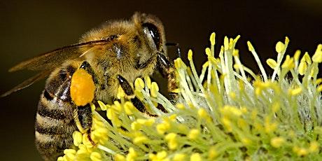 Bijzondere bijen in het Rivierenhof (namiddag) tickets