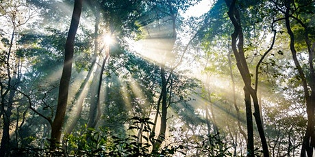 Forest Bathing and Mindfulness  Day Retreat tickets