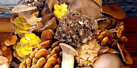 Mushroom Cultivation Workshop tickets