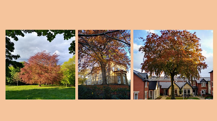 Chapel Allerton as the sun goes down & the moon rises image