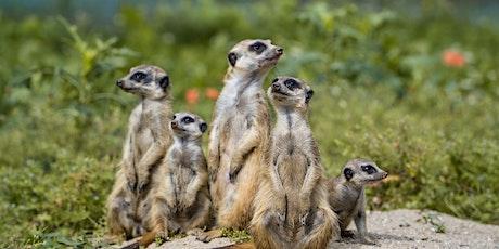 La gestión del equipo de Inteligencia Competitiva en la empresa entradas