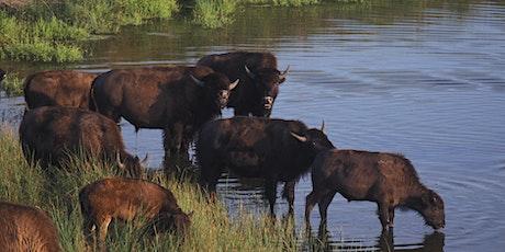 International Bison Convention tickets