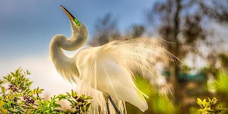 Florida Bird Photo Workshop tickets