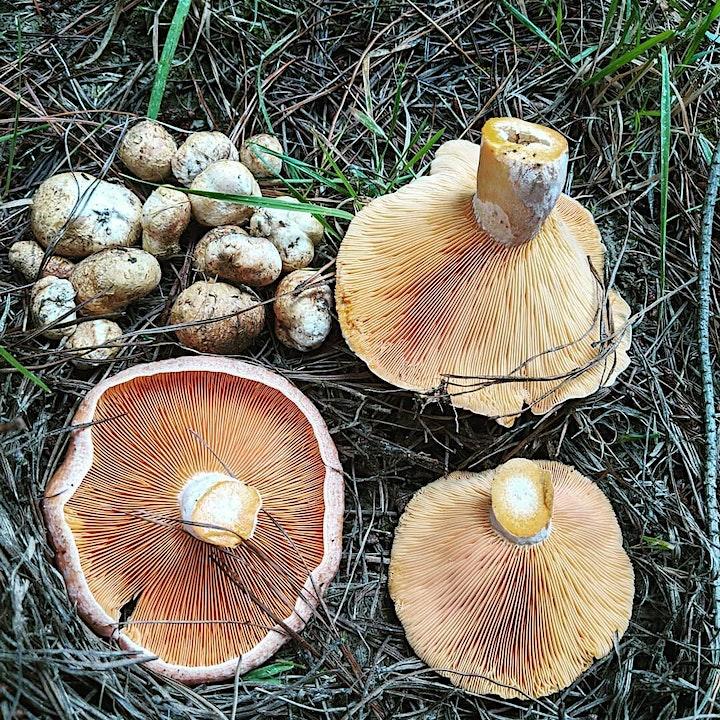 Wild Mushroom Foraging Tour image