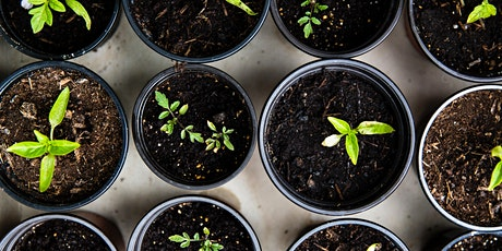 Creating an Eco Living Kitchen: Growing Your Own Food tickets