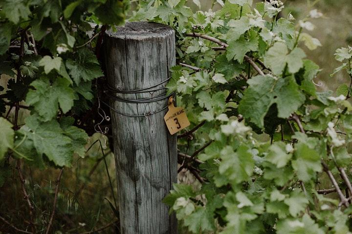 Marri Wood Park x Dinner by Leif Huru image