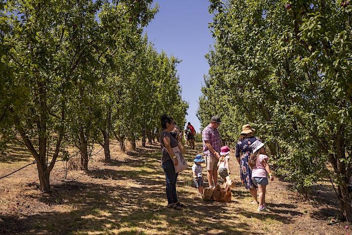 Apple Picking Tour image