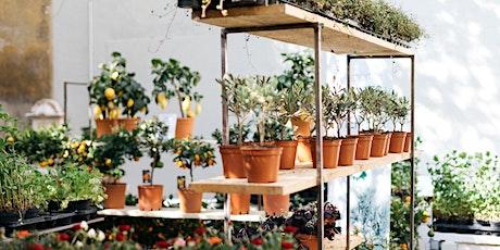Valladolid // El Jardín Efímero de Maison Bouture entradas