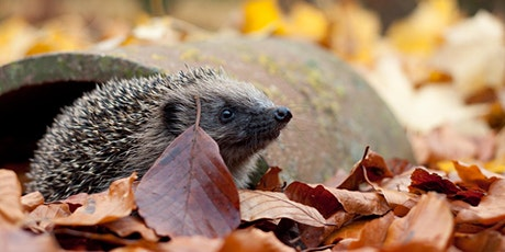 Introduction to hedgehogs EWC2806 tickets