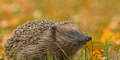 Basic Hedgehog Care  (EWC2806) tickets