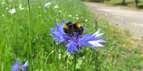 West Lothian B-Lines - Pollinator Workshop tickets