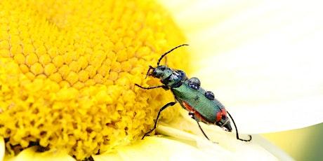 Entomological Field Techniques Part 2 tickets