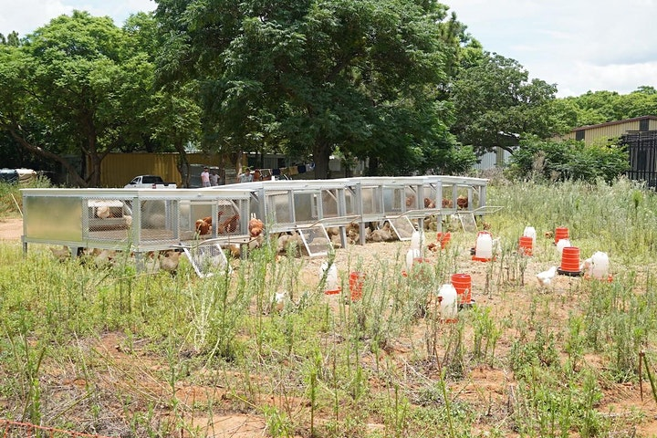Addressing Food Security through Urban Agriculture image