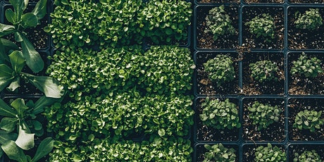 Balcony Vegetable Gardening tickets