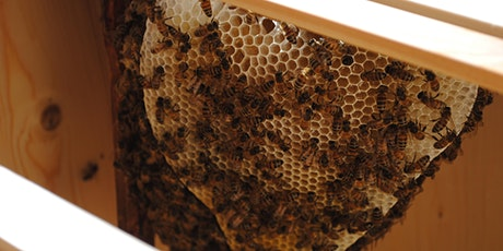 The Wisdom of Bees - what can we learn from life in the hive? tickets