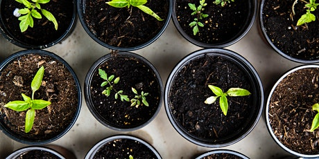 Wild Mountain Seeds: Plant Sale at TrueNature tickets