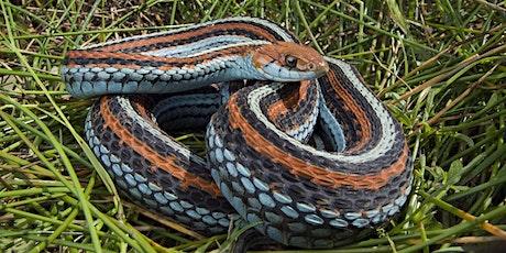 Meet the San Francisco Garter Snake tickets