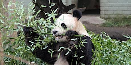 Zoo Fun with Mandarin tickets