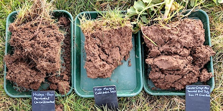 Soil Health and Regenerative Agriculture for Farmers - Live - Online Course tickets