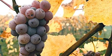 Vinprovning med naturvin Stockholm | Gamla Stans Vinkällare Den 02 Juni biljetter
