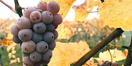 Vinprovning med naturvin Stockholm | Gamla Stans Vinkällare Den 24 Juni biljetter
