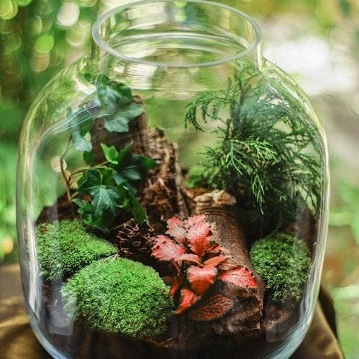 TEC Celebrates World Rainforest Day: Build Your Own Terrarium image
