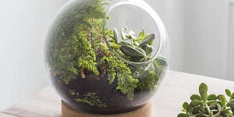 TEC Celebrates World Rainforest Day: Build Your Own Terrarium tickets