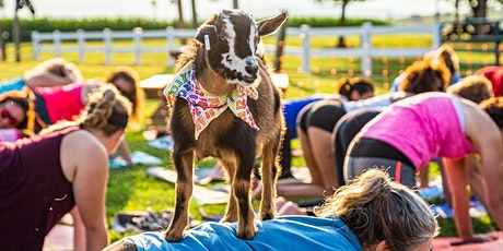 Goat Yoga at SBC tickets
