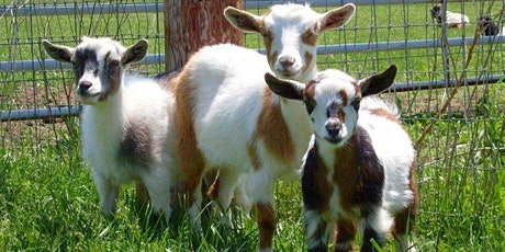Shake Your Goat Tail  Dance A Thon tickets