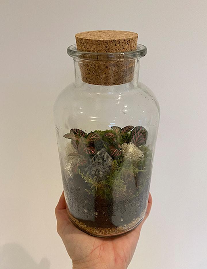 Summer Terrarium Making Workshop: Mini Apothecary Jar Terrariums image