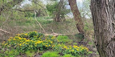 Chester Zoo BAP Corridor & Estate Invertebrate Recording Day tickets