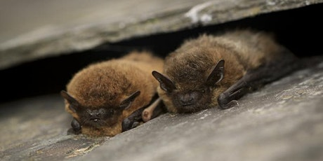 Family Bat Night (5+) @ Leam Valley Nature Reserve tickets
