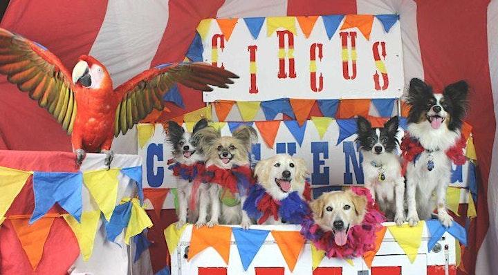 CANCELED - Circus Chickendog image