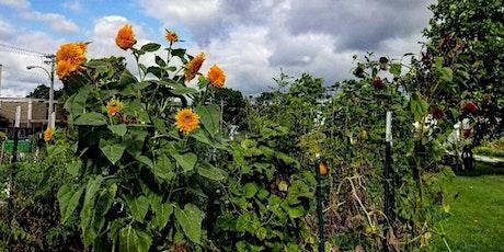 May School Garden Meet-up: Summer Maintenance tickets