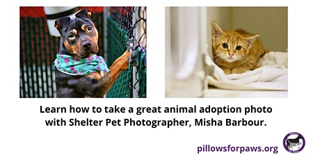 How to Take a Great Shelter Animal Adoption Photo tickets