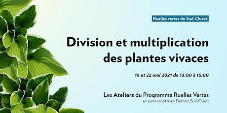 Atelier division et multiplication de vivaces et autres plantes tickets