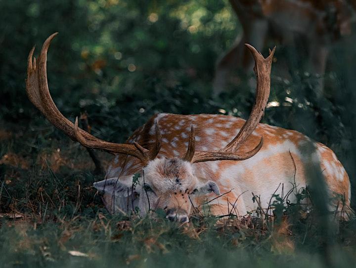 Wildlife Photography Workshops in Richmond Park, London image