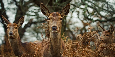 Wildlife Photography Workshops in Richmond Park, London tickets